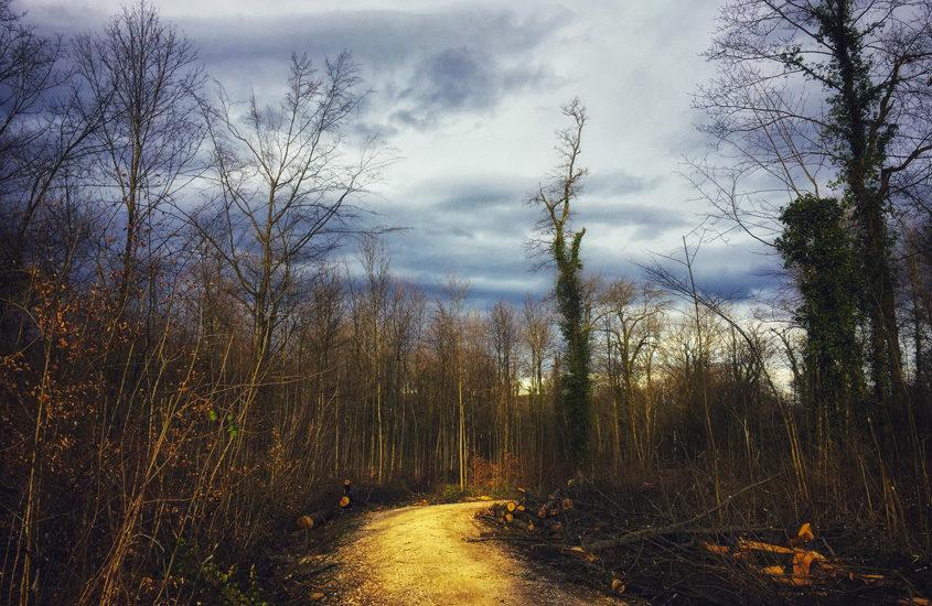 mud path in Hardwald park